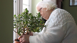 Old woman places the flower pot on the window Footage