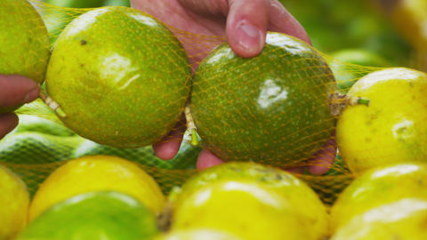 Close-up shot of green mandarin oranges in a market in Rio de Janeiro, Brazil Footage