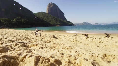 Slow motion of birds flying from Red Beach's sand in Rio Footage