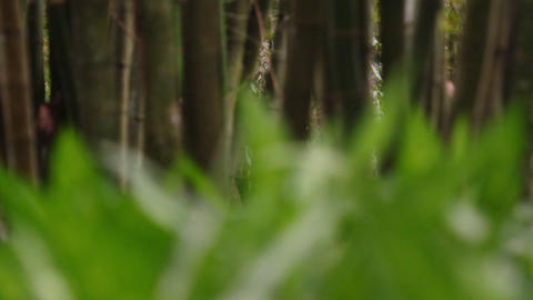 Closeup shot with rack focus of grass with trees Footage