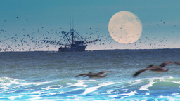 4K Commercial Fishing Boat stock footage