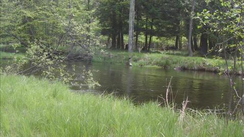 Idyllic river scene pan Stock Video Footage