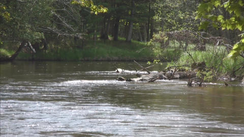 River water flow toward viewer Stock Video Footage
