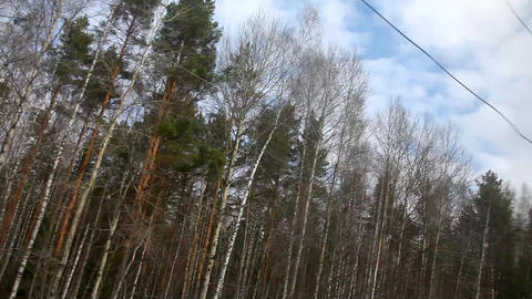 View from train on forest and sky Footage