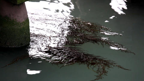 seaweed in water Footage