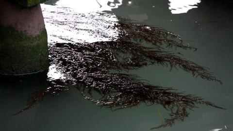 seaweed in water Stock Video Footage