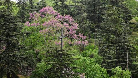 Cross in trees, garden in Rocamadour Stock Video Footage