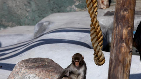 Monkey play on rope Stock Video Footage