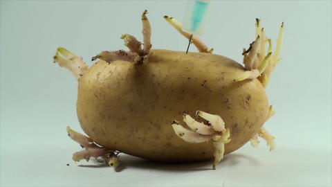 Injecting Substance In A Potato Sprout, Research,  Footage