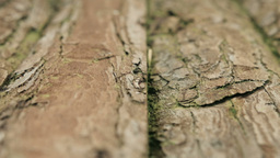 Wooden log background texture HD Stock Footage Footage