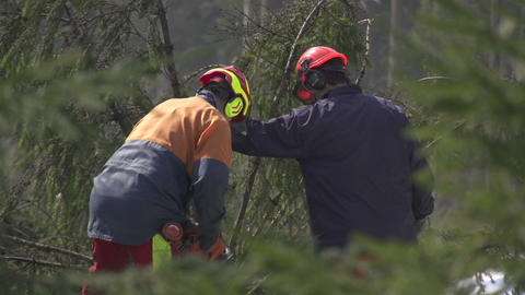 Foresters working in forest Footage