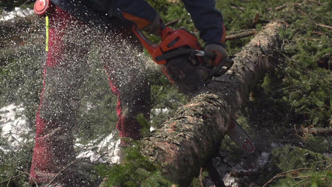 SLOW MOTION: Forester cutting a fallen spruce tree Footage