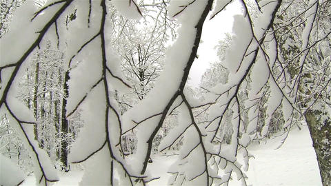 Snowy branches Footage