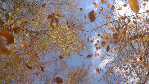 SLOW MOTION: falling leaves in forest Footage