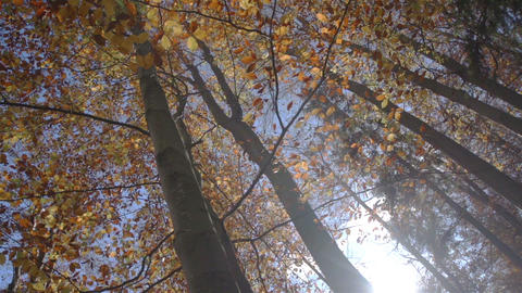 SLOW MOTION: Sunbeam in the autumn forest Footage