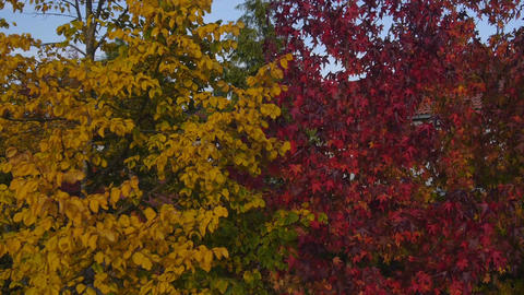 AERIAL: Beautiful Fall Foliage Footage