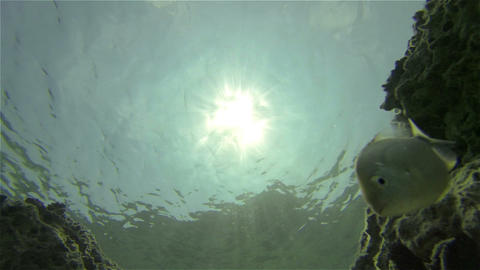UNDERWATER: Curious fishes Footage