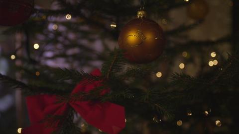 Christmas tree Footage