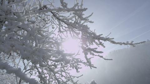 Sun shines through snowy brunches on a misty morni Footage