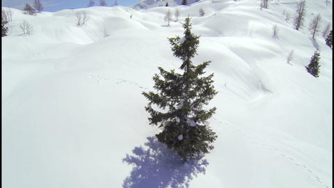 AERIAL: Around the tree in European Alps Live Action