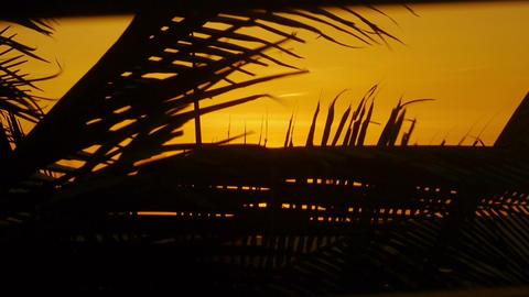Palm tree at windy sunset Footage