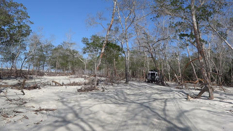 Drive through the old mangrove forest Footage