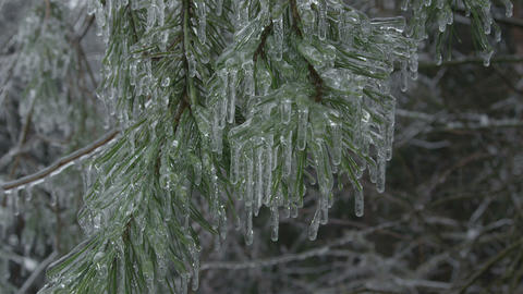 Icy spruce tree Footage