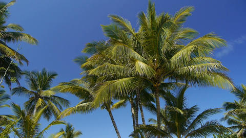 Palms on a tropical beach with a sound of an ocean Footage