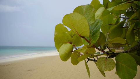 Tropical Beach In Rain stock footage