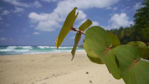 Idyllic tropical beach Footage