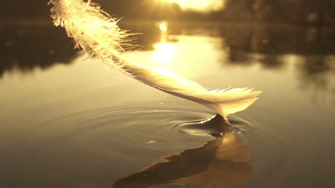 SLOW MOTION: Taking The Feather Out Of Water stock footage