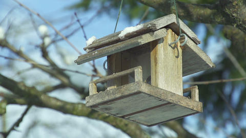 Empty bird house in wintertime Live Action