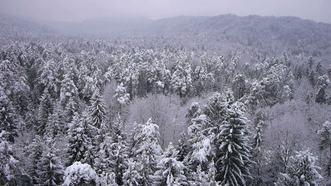 AERIAL: Winter forest Live Action