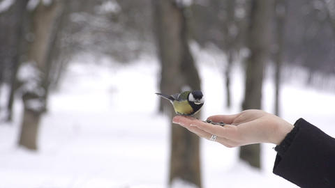 SLOW MOTION: Titmouse birds eating seeds out of a  Footage