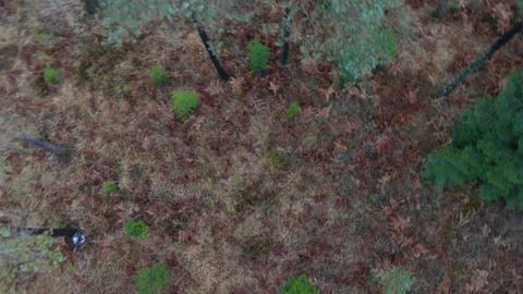 Flight above the forest Footage