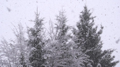 SLOW MOTION: Snowing in forest Footage