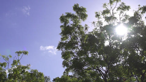 SLOW MOTION: Sun shining through lush leaves Footage
