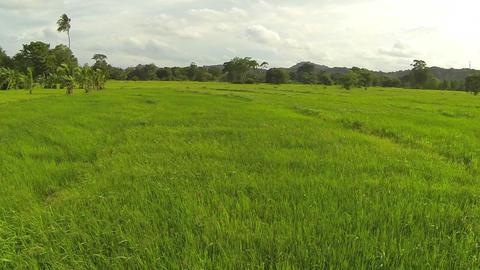AERIAL: Rice fields in Sri Lanka Footage