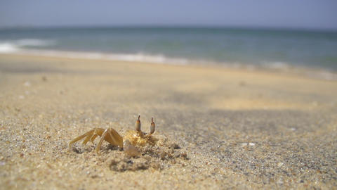 SLOW MOTION: Little Crab On A Beach Close Up stock footage