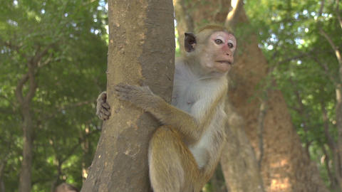 SLOW MOTION: Monkey in a jungle Footage