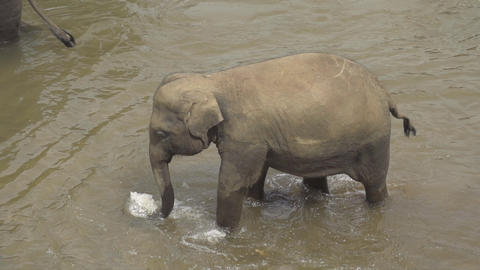 SLOW MOTION: Elephant walking in the water Footage