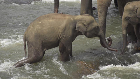 SLOW MOTION: Elephant family in the river Footage