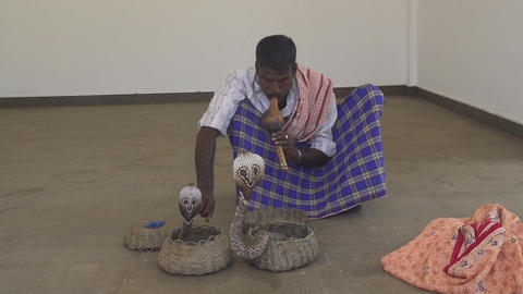Charming a cobra with a flute Footage