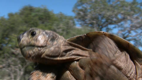 A Tortoise Directing The Turtle Philharmonic Orche stock footage