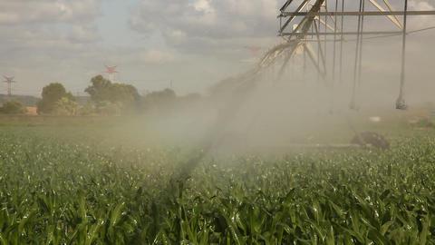 Walking water line irrigating corn Footage
