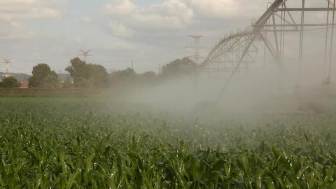 Walking water line irrigating corn time lapse Footage