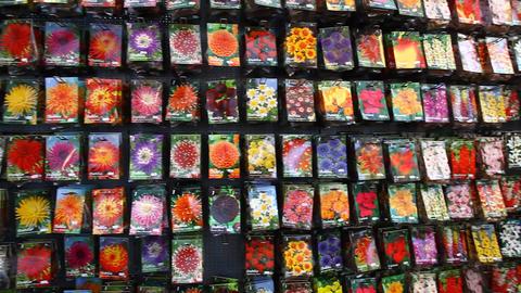 Floating flower market in Amsterdam Footage