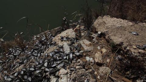 Dead fish Live Action