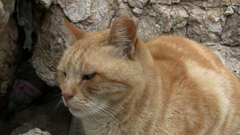 Neutered stray cat Footage