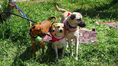 Dog adoption fair Footage